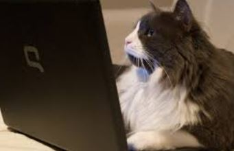 cat at laptop