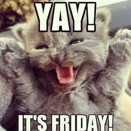 Friday kitty