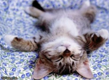 relaxing kitty