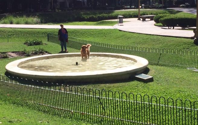dog-playing.jpg
