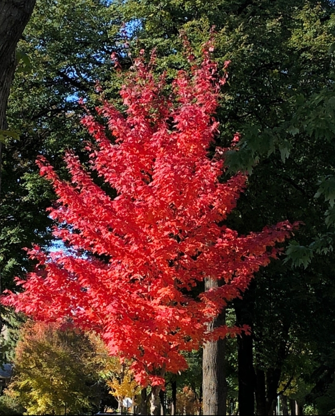 brilliant-fall-red-e1539896689748.jpg