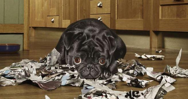 dog eating paper.JPG