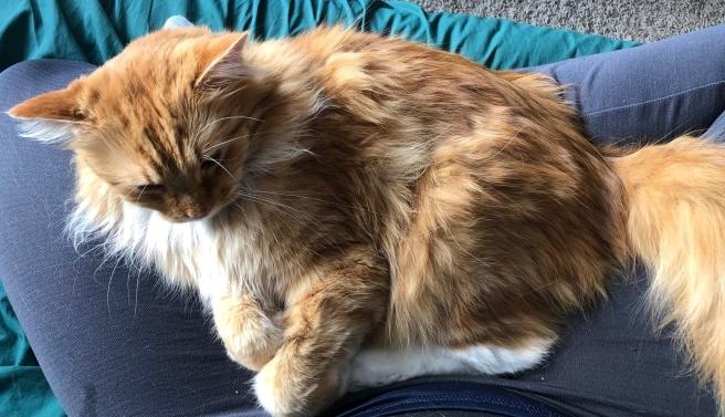 Calvin in lap