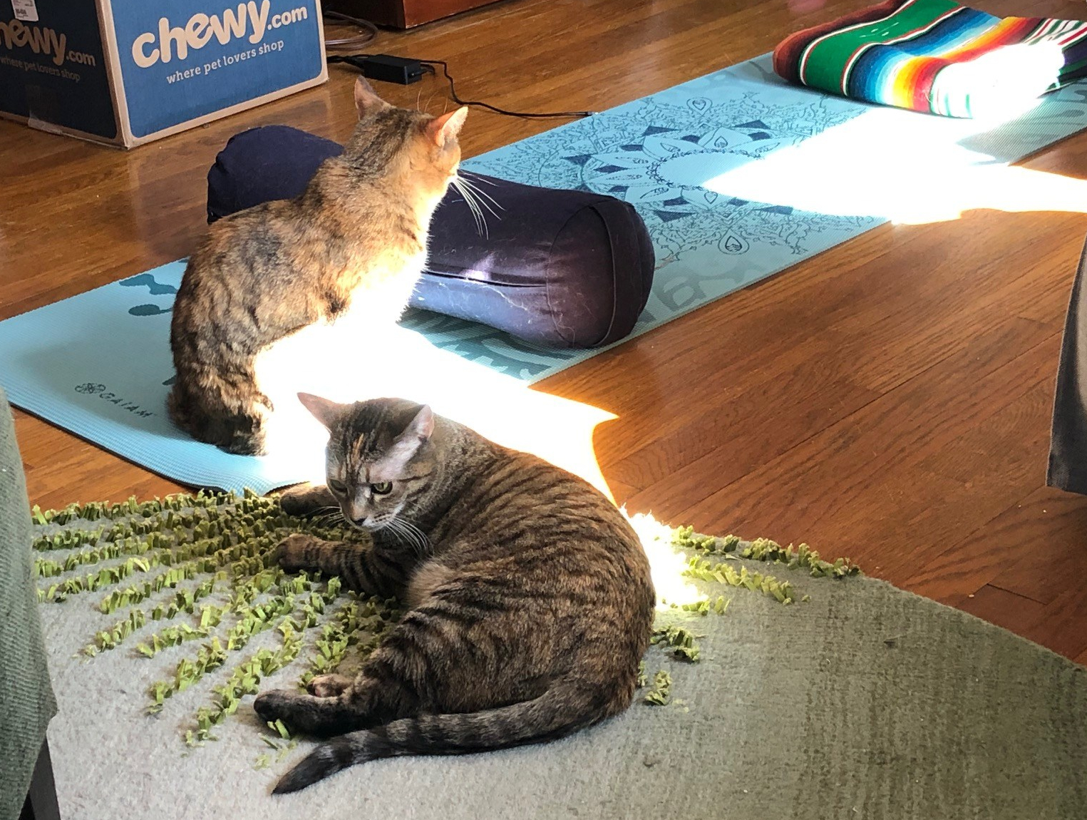 cats-and-yoga.jpg