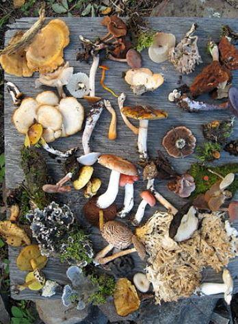 biodiversity wikipedia